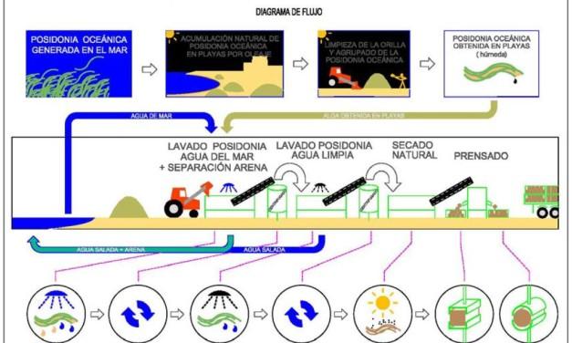 Nuevo sistema de limpieza de algas en playas desarrollado por la Universidad de Alicante