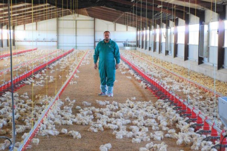 Dos extremeños idean un sistema para agilizar la limpieza de las granjas de pollos